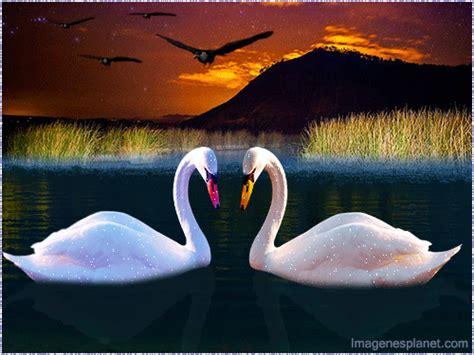 imagenes bonitas de buenas noches gif gratis fotos de flores bonitas con movimiento