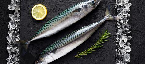 les poissons d eau douce le maquereau