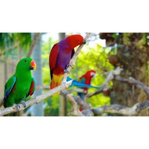 Tiket Bali Bird Park Dewasa jual bali bird park tiket masuk untuk anak 2 12 tahun srps38 harga kualitas