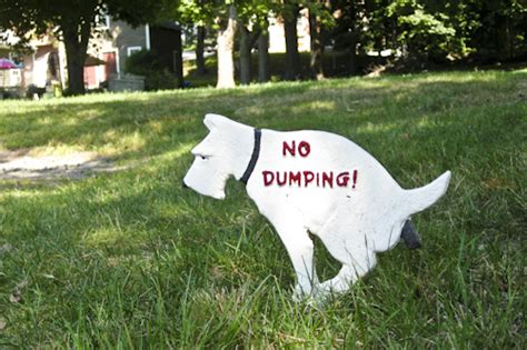 dog poop backyard dog pooping on cake ideas and designs