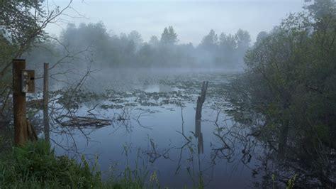 Purple Mood foggy swamp landscape amp rural photos nick s pics