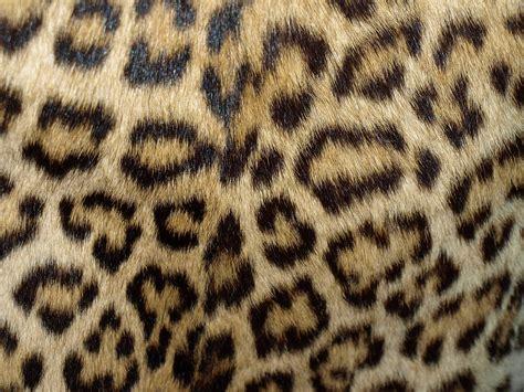 s leopard file leopard coat 1960 70 4 jpg wikimedia commons