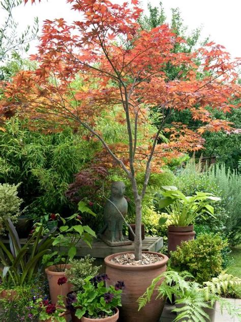 Potted Tree For Patio by 25 Best Ideas About Trees In Pots On Potted