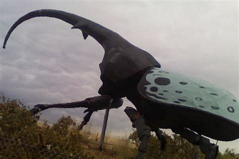 world s largest hercules world s largest hercules beetle