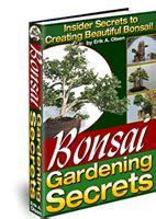 bonsai secrets designing growing first bonsai tree cotoneaster apiculatus