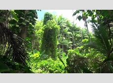 BRAZILIAN JUNGLE | 10hr White Noise - relaxing meditation ... Hours Of Sleep Required