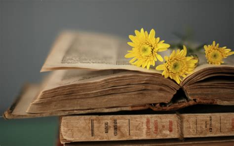 yellow sky emerald sea books yellow flowers on the book 1920 x 1200 other
