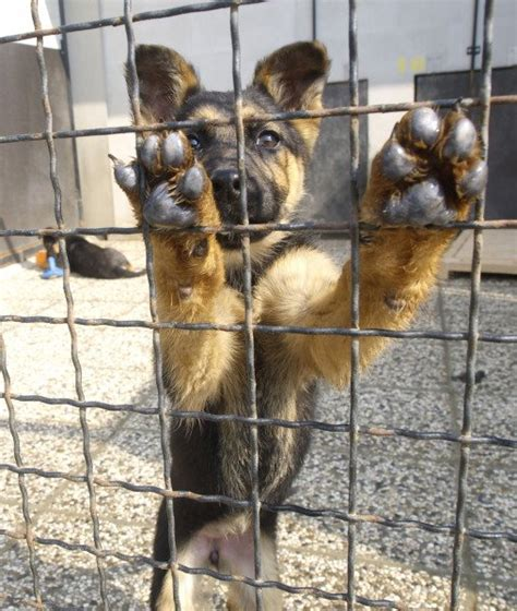 dogs shelter 10 breeds commonly found in animal shelters dogs tips advice me