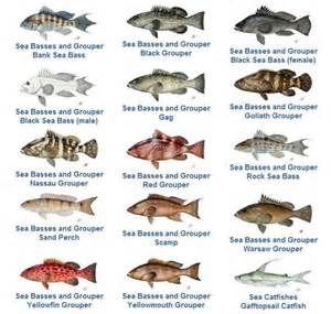 Wall Murals San Diego snapper fish species grouper family florida fish