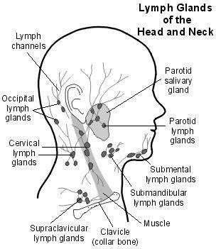 Detox Lymph Nodes Swollen by Best 25 Lymph Nodes Ideas On Lymph Detox