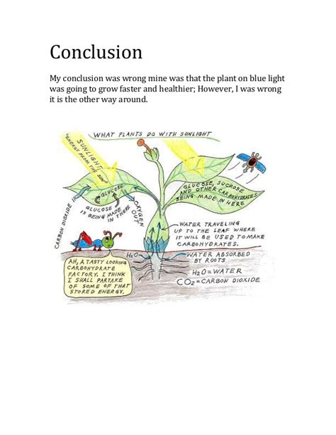 does the color of light affect plant growth how does the color of the light affect the growth of a plant