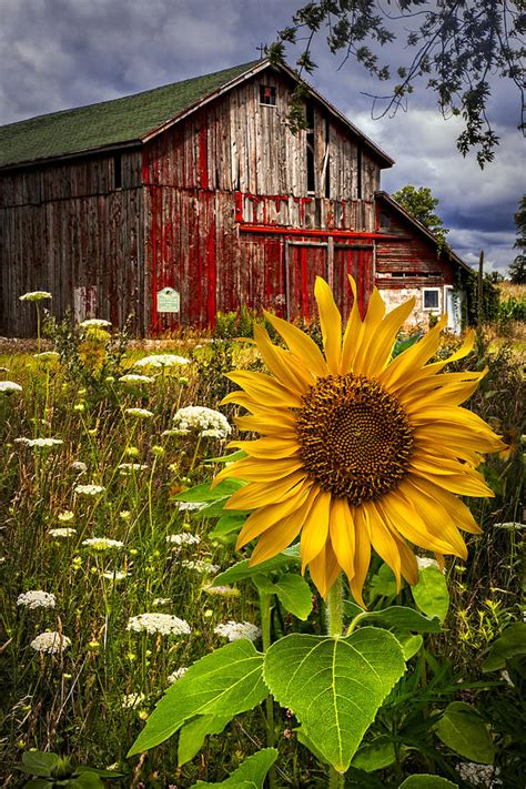 Texas Farmhouse Homes by Barn Meadow Flowers Photograph By Debra And Dave Vanderlaan