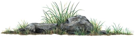 Tree Wall Mural rock amp grass mural wallsofthewild com