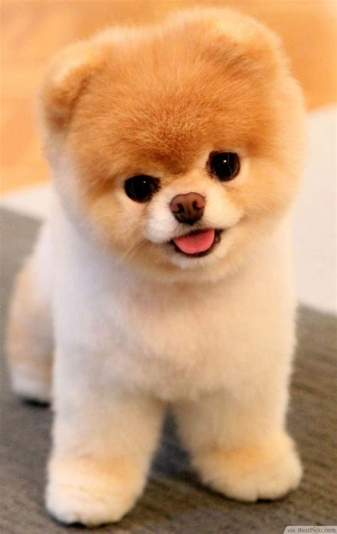 Adorable Pets by Best 25 Pictures Ideas On