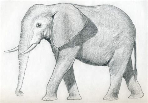 how to draw a doodle elephant elephant drawing pictures drawing pictures