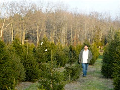 photos chopping down christmas trees in monmouth county
