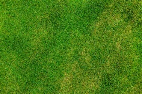 grass background pattern free grass background images free stock photos download 11 660