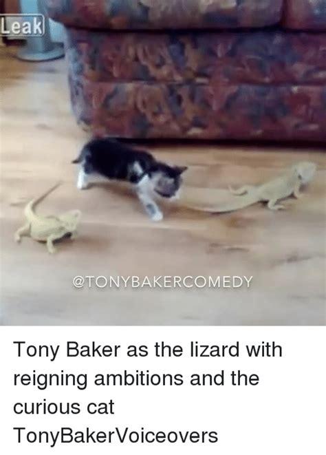Lot Lizard Meme - 25 best memes about curious cat curious cat memes