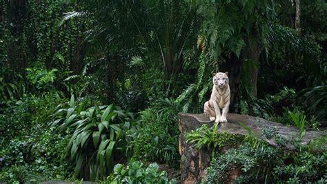 fotos de animales en la selva 191 qu 233 animales viven en la selva