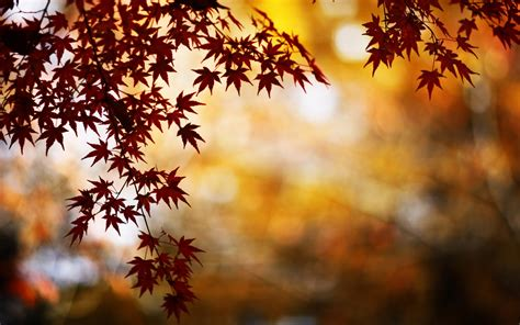 computer video wallpaper download red foliage bokeh mac wallpaper download free mac