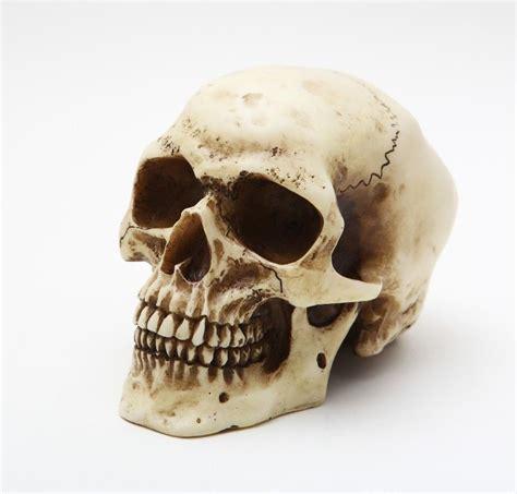 Spooky Home Decor by Homo Sapien Human Bone Color Small Skull Sculpture