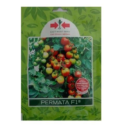 Benih Daun Bawang Fragrant Kemasan Known You Seed benih tomat permata f1 1 750 biji panah merah