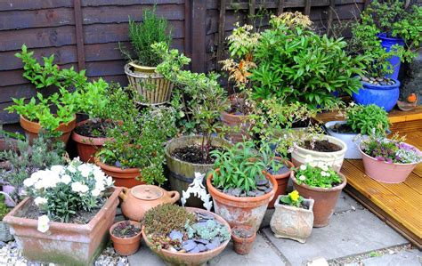 Herb Container Garden - growing in pots containers on patios etc book reviews