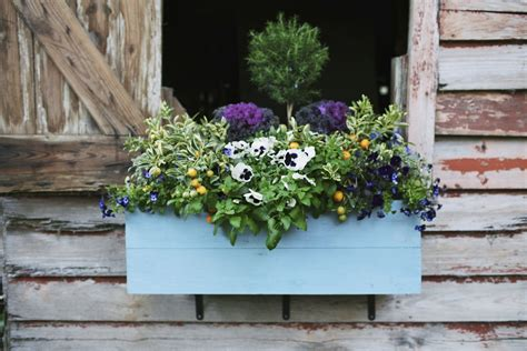 window box planting ideas 18 gardening ideas for your window boxes window box