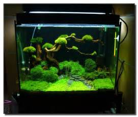 aquariums on planted aquarium aquascaping and