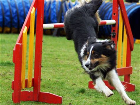 agility competition your agility competition thats my