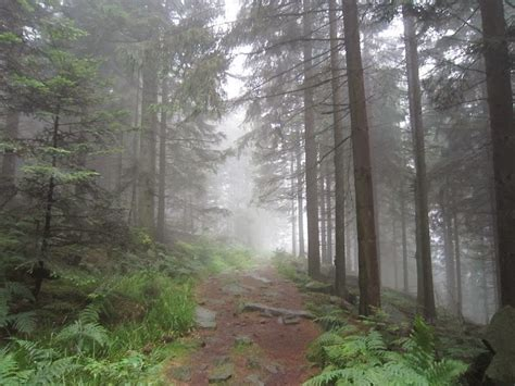 black forest travel trip journey black forest mountain germany