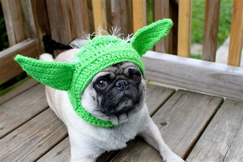 buying pugs the only way i would buy a pug one more thing before we go fierce and nerdy