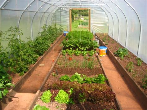 greenhouse layout the poly tunnel first year jealous secret garden