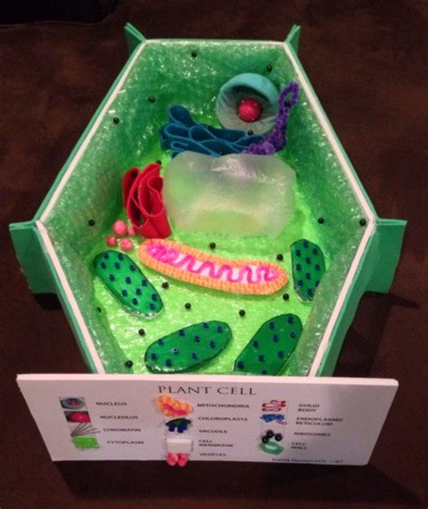 Make A 3d Model Of A Plant Cell how to create 3d plant cell and animal cell models for