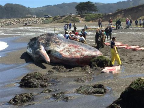 dead whale newhairstylesformen2014 com important people who died within last week