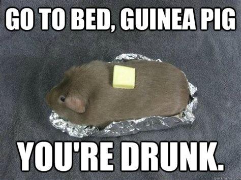 bed memes go to bed guinea pig you re drunk guinea pig potato