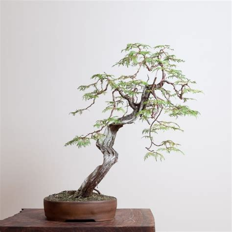 17 best images about bonsai kusamono on pinterest