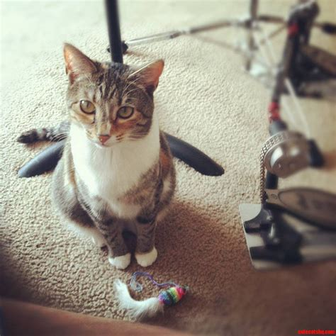 how to a to play fetch nala really wants to play fetch cats hq free pictures of cats and photo