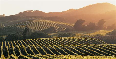 Photo Napa Valley by Napa Valley Vacation Travel Guide And Tour Information Aarp