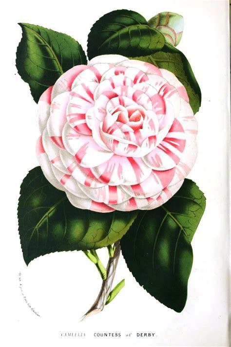 free floral images remodelaholic 25 free printable vintage floral images