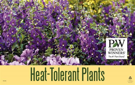 heat tolerant plants p allen smith container gardening grcom info