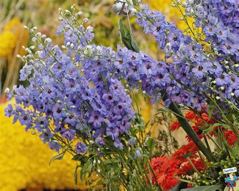 immagini paesaggi fioriti immagini prati fioriti 42 immagini in alta definizione hd