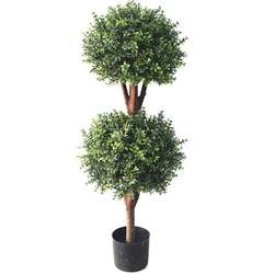 Foliage Plants For Hanging Baskets - deluxe double boxwood ball topiary tree from evergreen direct