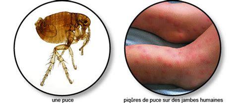 Comment Se Débarrasser Des Puces Sur Un Chien Naturellement by Maladies De Peau Transmissibles 224 L Homme Chien