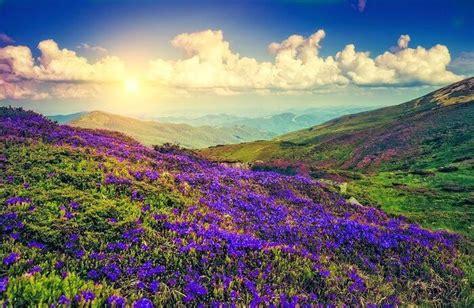 neelakurinji flowering season    paint munnar blue