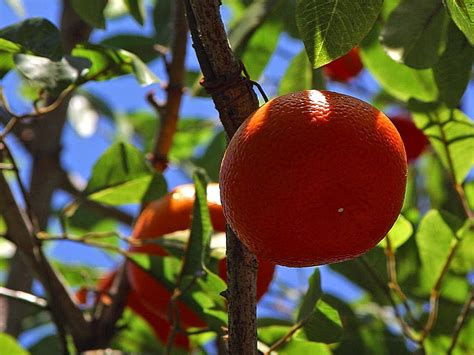 benefits of pruning fruit trees fruit of your labor the benefits of pruning fruit trees