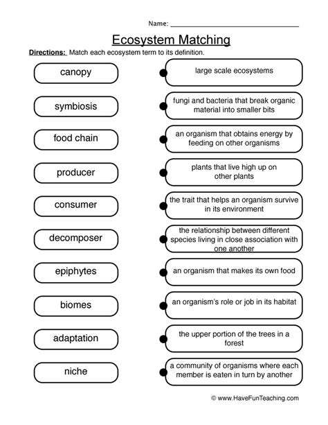 Ecosystems Worksheets by Matching Ecosystems Worksheet 2