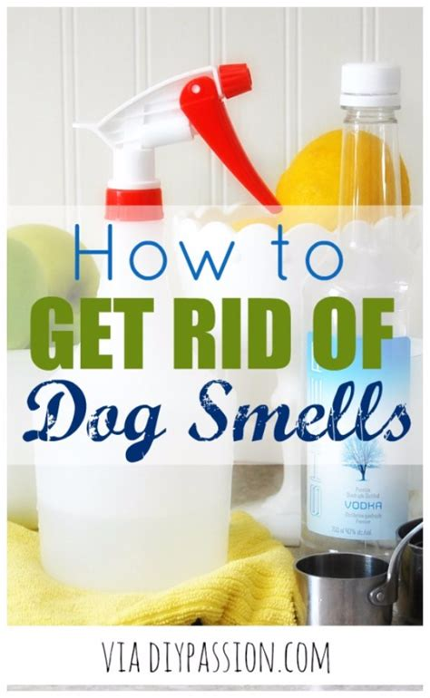 how to get rid of dog odor in house 33 dog hacks you need to try today