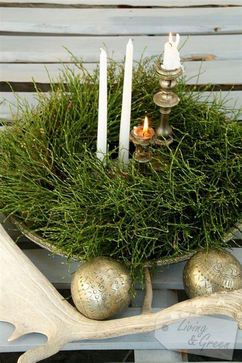 Korkenzieherweide äste Kaufen by Korkenzieherweide 196 Ste Korkenzieherweide Bild Foto