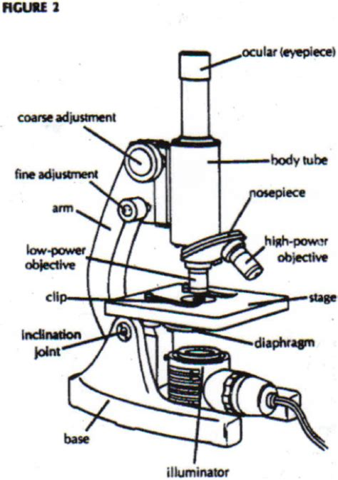diagram of microscope microscope diagram parts clipart best